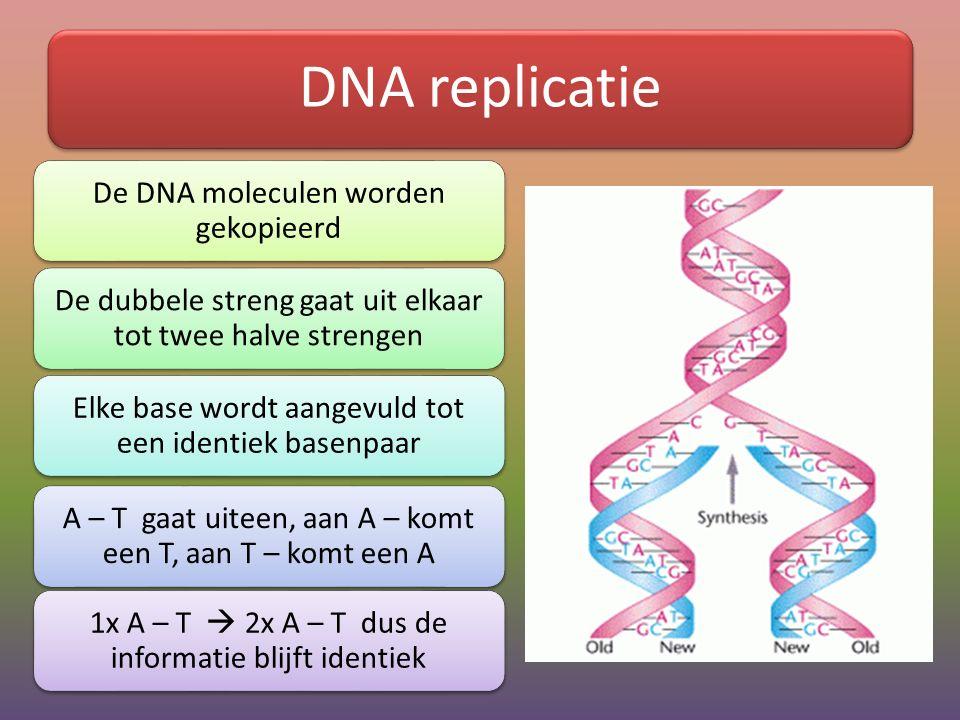 DNA replicatie De DNA moleculen worden gekopieerd