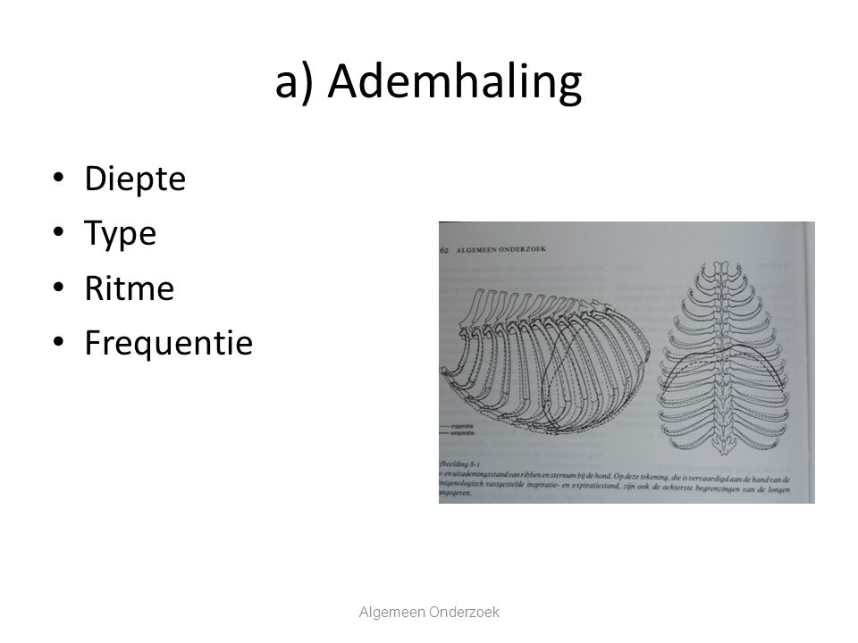 a) Ademhaling Diepte Type Ritme Frequentie