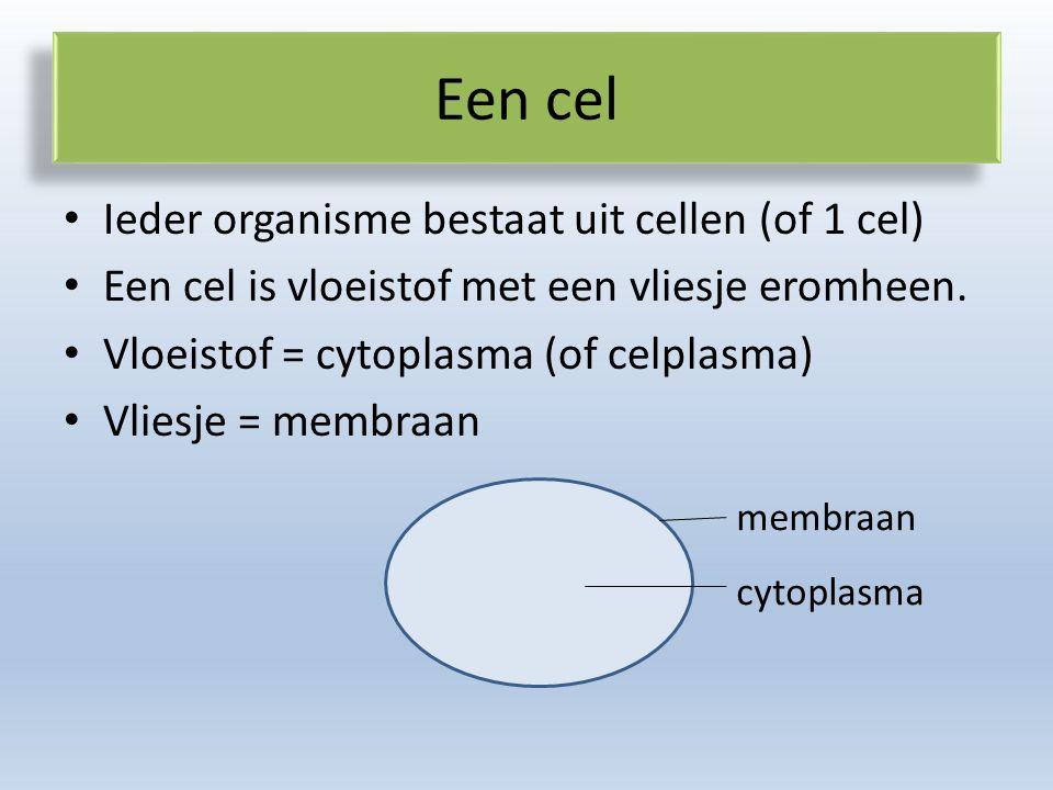Een cel Ieder organisme bestaat uit cellen (of 1 cel)