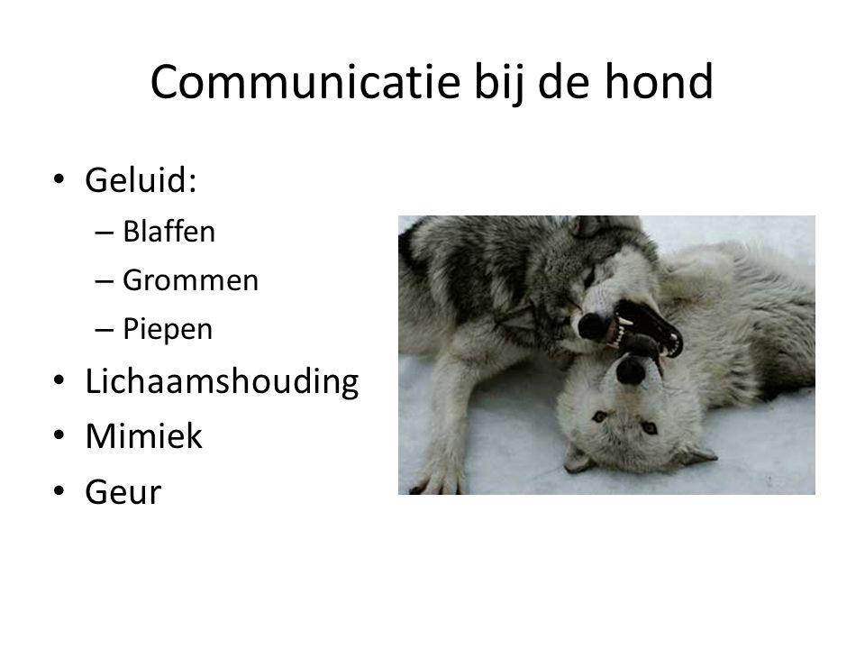Communicatie bij de hond