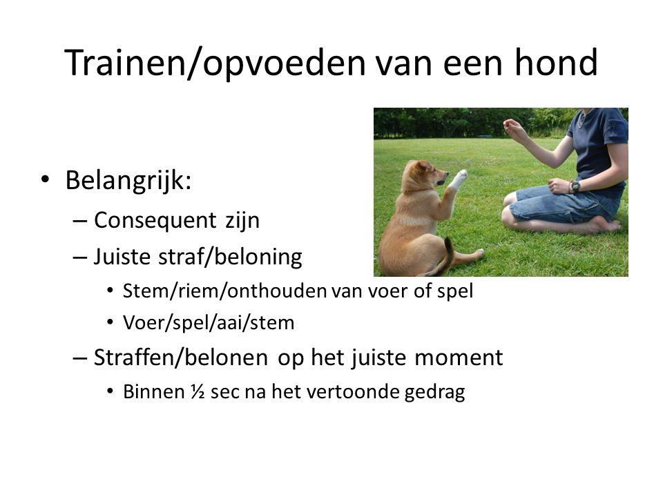 Trainen/opvoeden van een hond