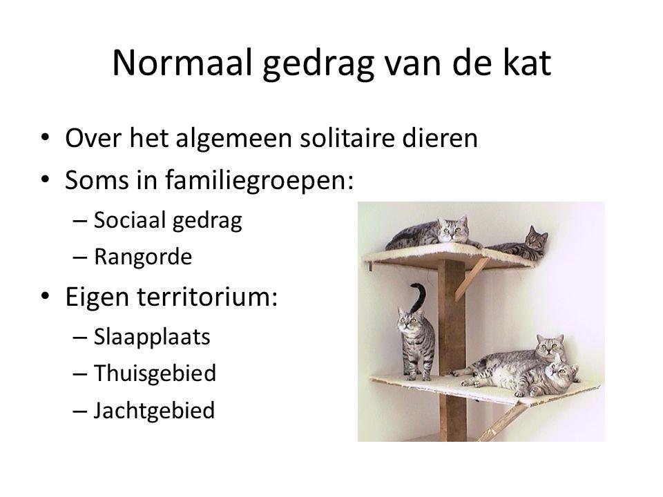 Normaal gedrag van de kat