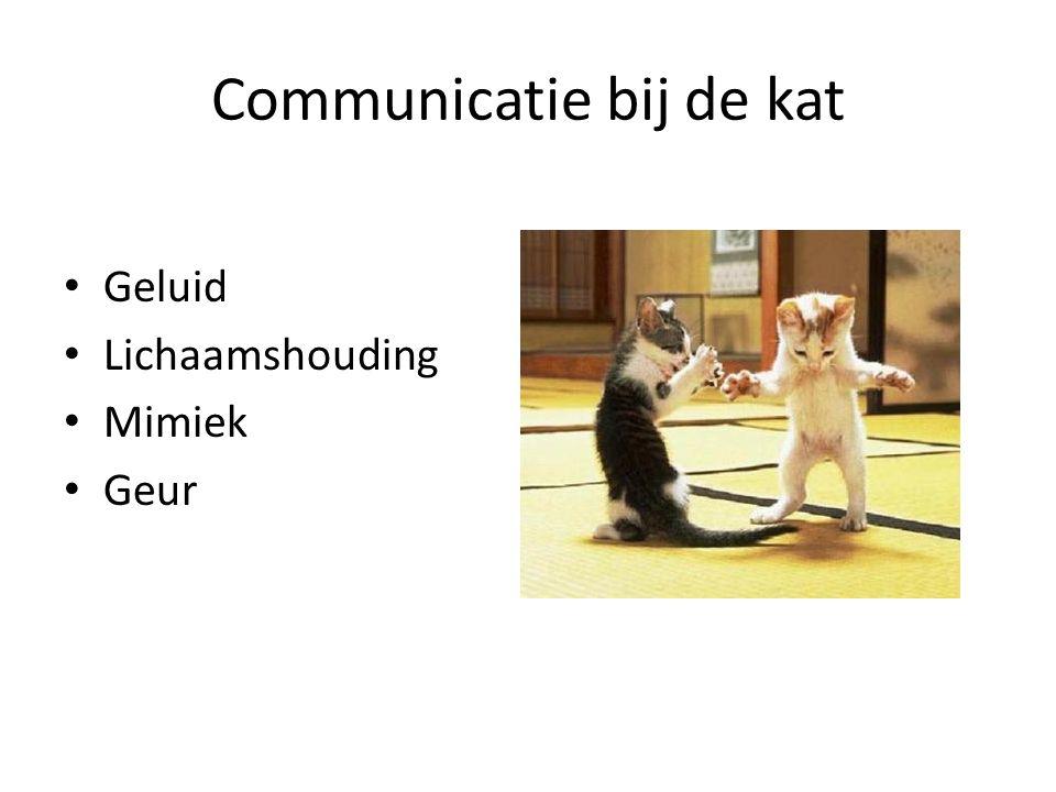 Communicatie bij de kat