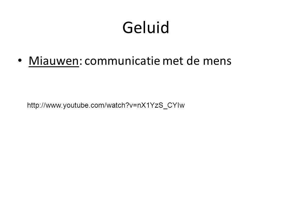 Geluid Miauwen: communicatie met de mens