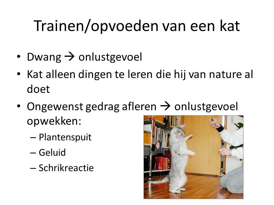 Trainen/opvoeden van een kat