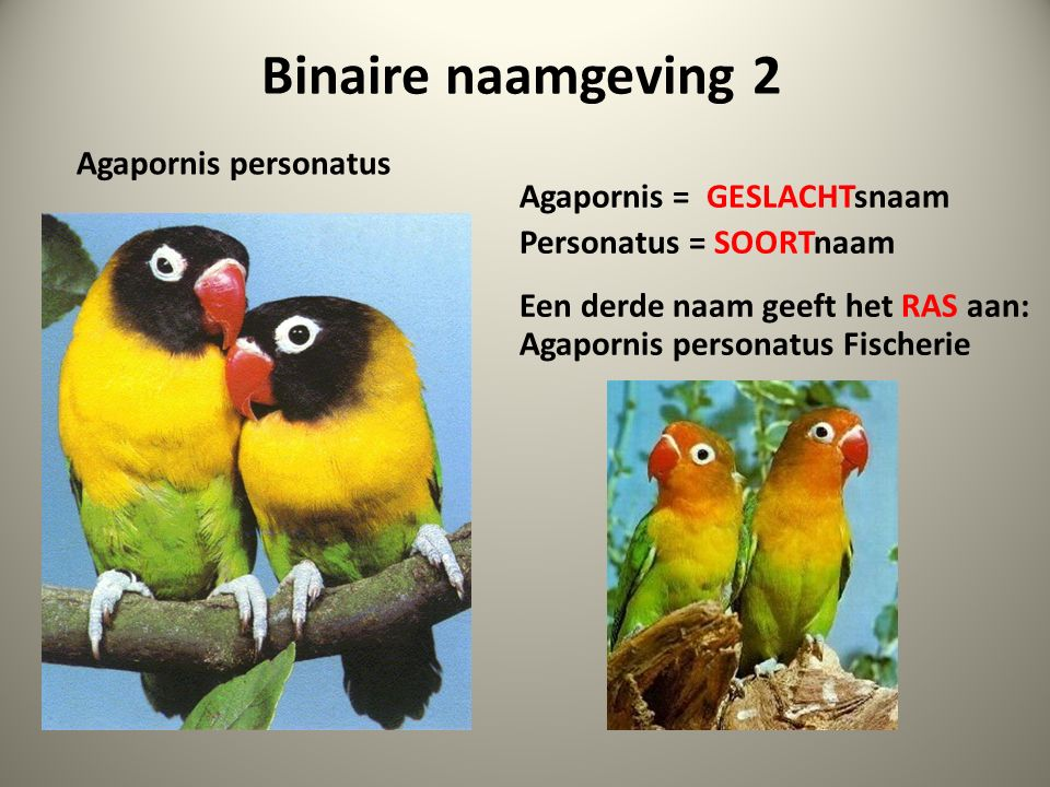 Binaire naamgeving 2 Agapornis personatus Agapornis = GESLACHTsnaam