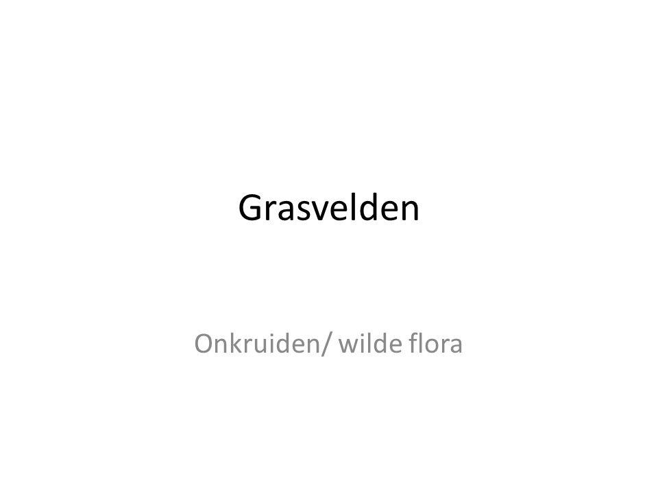 Onkruiden/ wilde flora