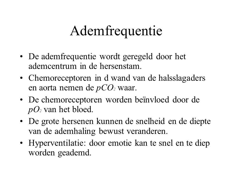 Ademfrequentie De ademfrequentie wordt geregeld door het ademcentrum in de hersenstam.