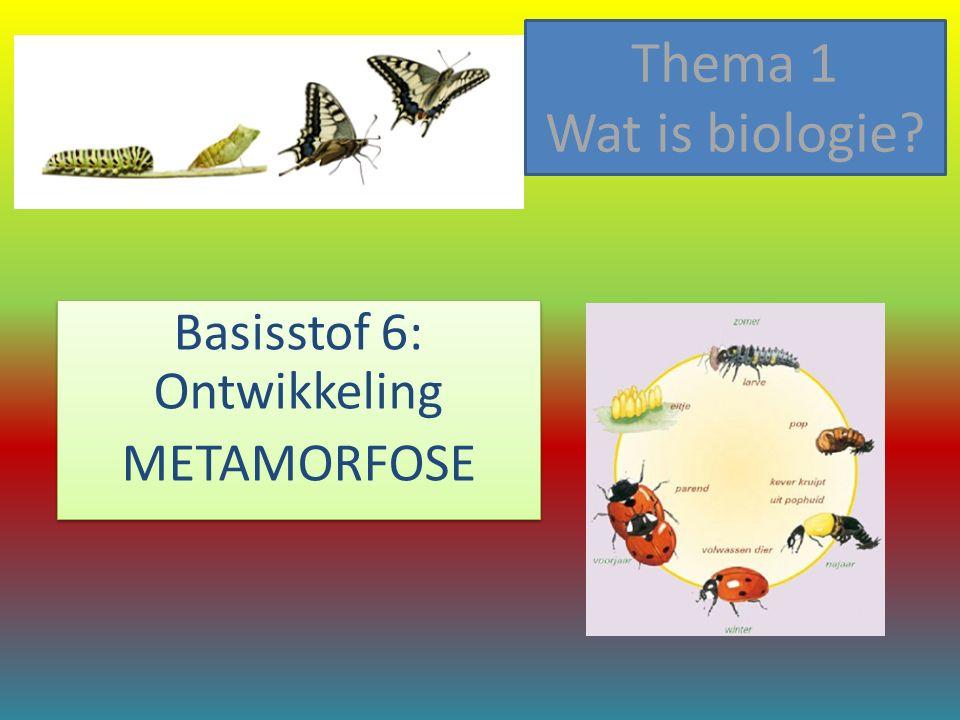 Basisstof 6: Ontwikkeling METAMORFOSE