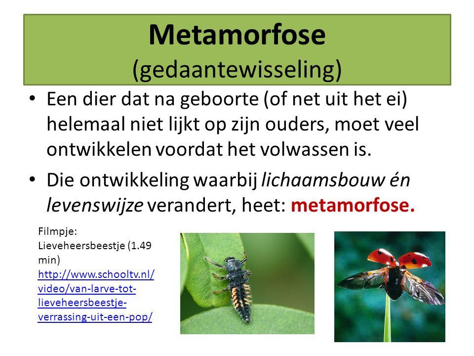 Metamorfose (gedaantewisseling)