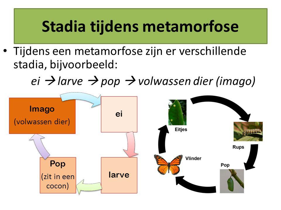 Stadia tijdens metamorfose