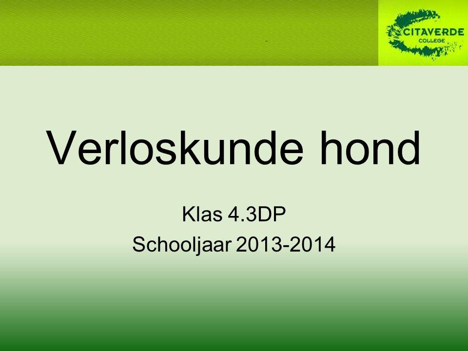Verloskunde hond Klas 4.3DP Schooljaar 2013-2014