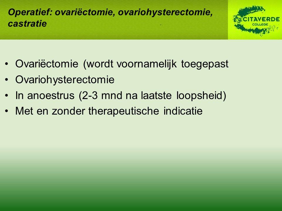 Ovariëctomie (wordt voornamelijk toegepast Ovariohysterectomie