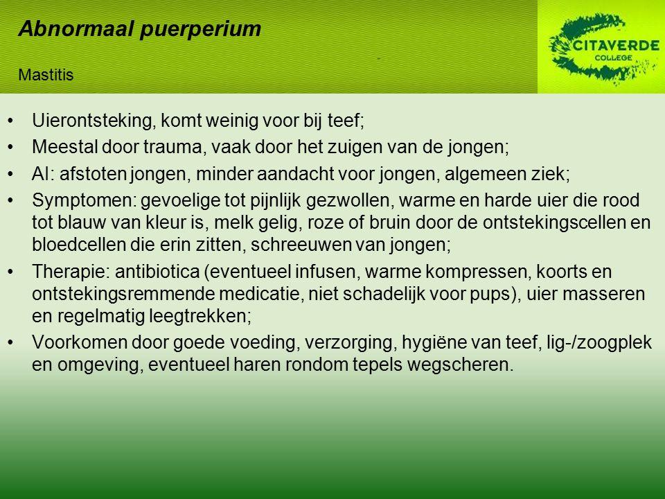 Abnormaal puerperium Uierontsteking, komt weinig voor bij teef;
