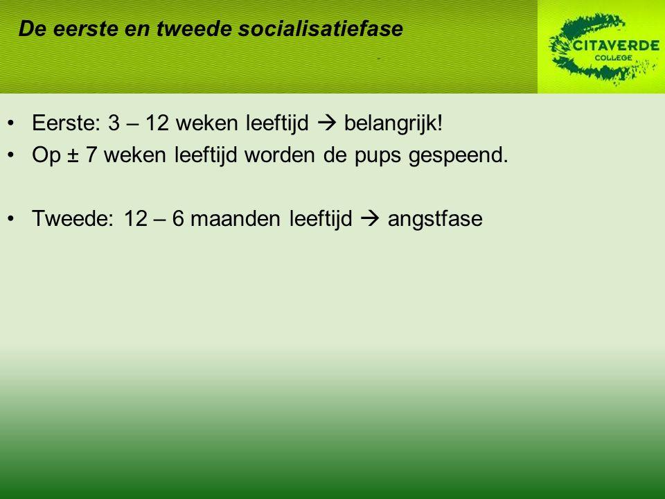 De eerste en tweede socialisatiefase