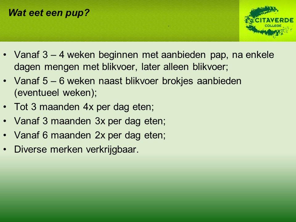 Wat eet een pup Vanaf 3 – 4 weken beginnen met aanbieden pap, na enkele dagen mengen met blikvoer, later alleen blikvoer;