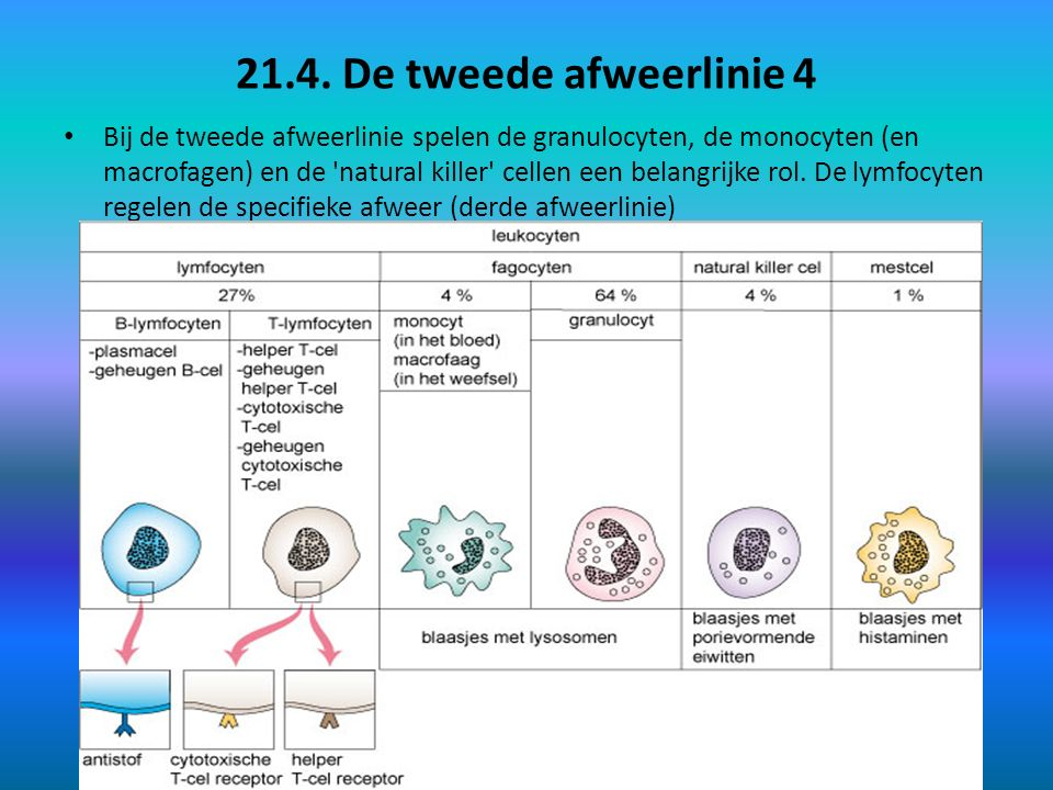 21.4. De tweede afweerlinie 4