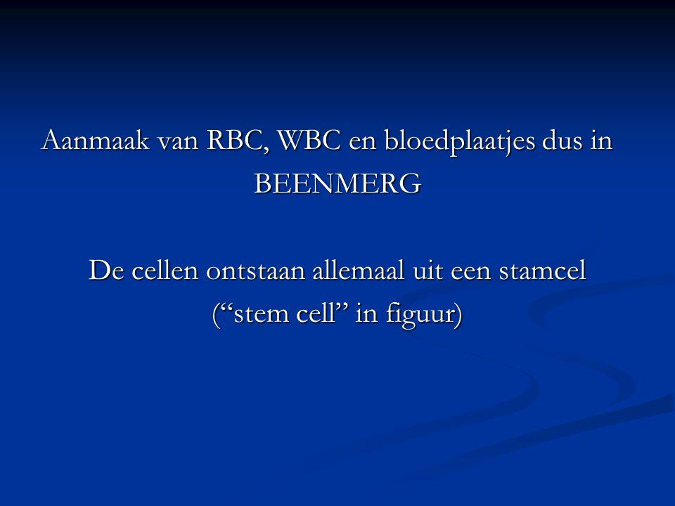 Aanmaak van RBC, WBC en bloedplaatjes dus in BEENMERG De cellen ontstaan allemaal uit een stamcel ( stem cell in figuur)