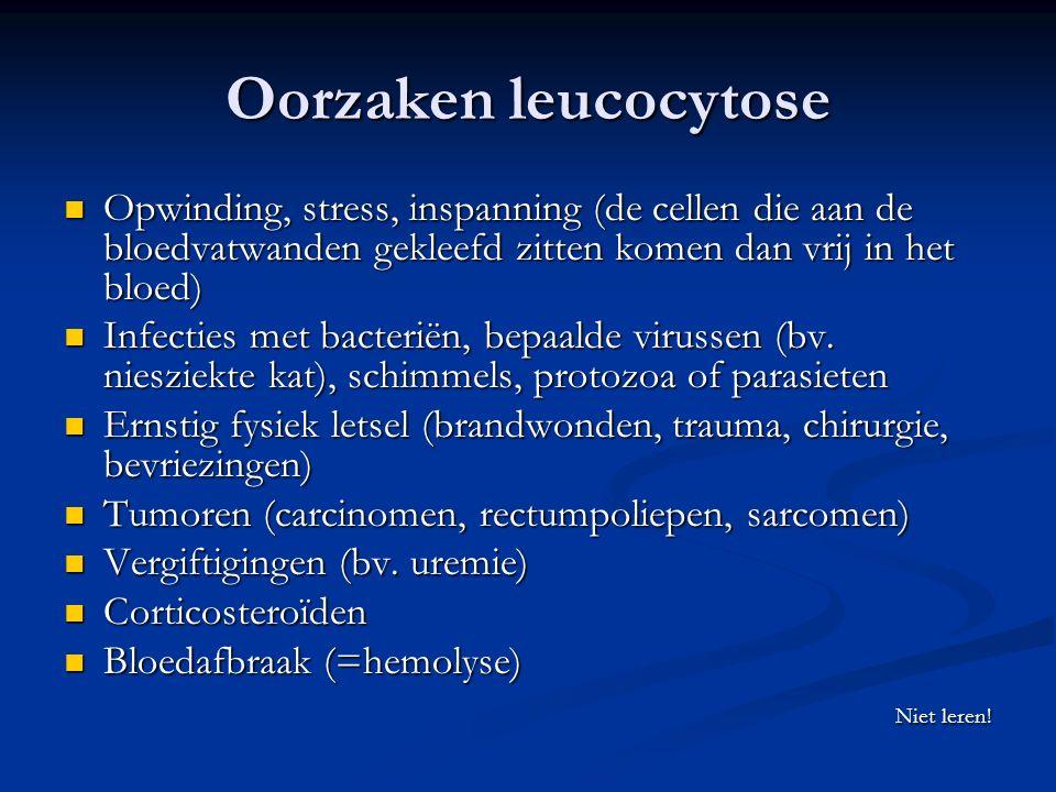 Oorzaken leucocytose Opwinding, stress, inspanning (de cellen die aan de bloedvatwanden gekleefd zitten komen dan vrij in het bloed)