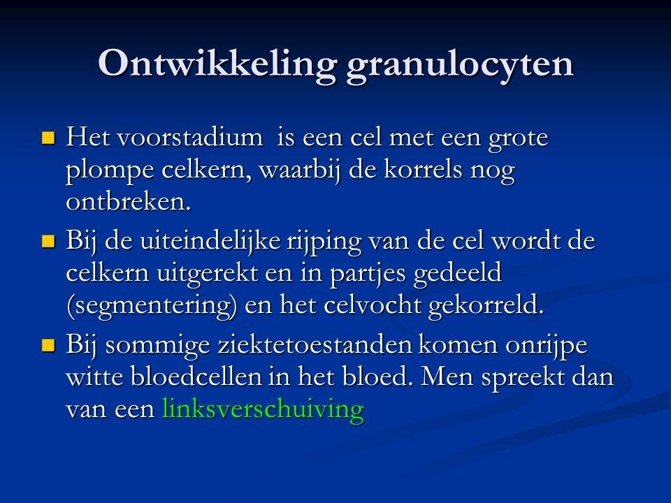 Ontwikkeling granulocyten