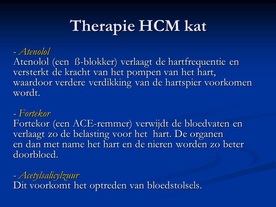 Therapie HCM kat