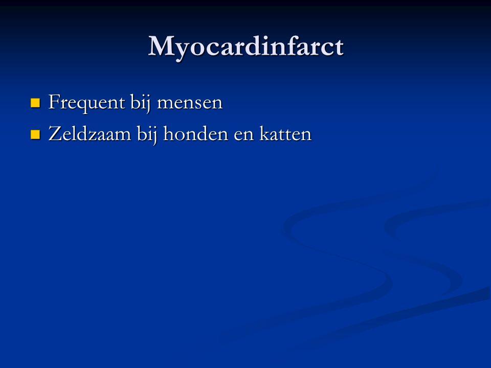 Myocardinfarct Frequent bij mensen Zeldzaam bij honden en katten