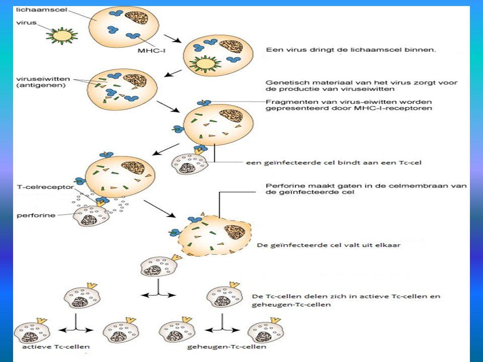 21.5.6. Tc-cellen en MHC-I 3 klikken