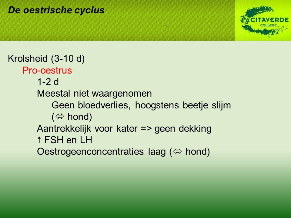De oestrische cyclus Krolsheid (3-10 d) Pro-oestrus. 1-2 d. Meestal niet waargenomen. Geen bloedverlies, hoogstens beetje slijm.