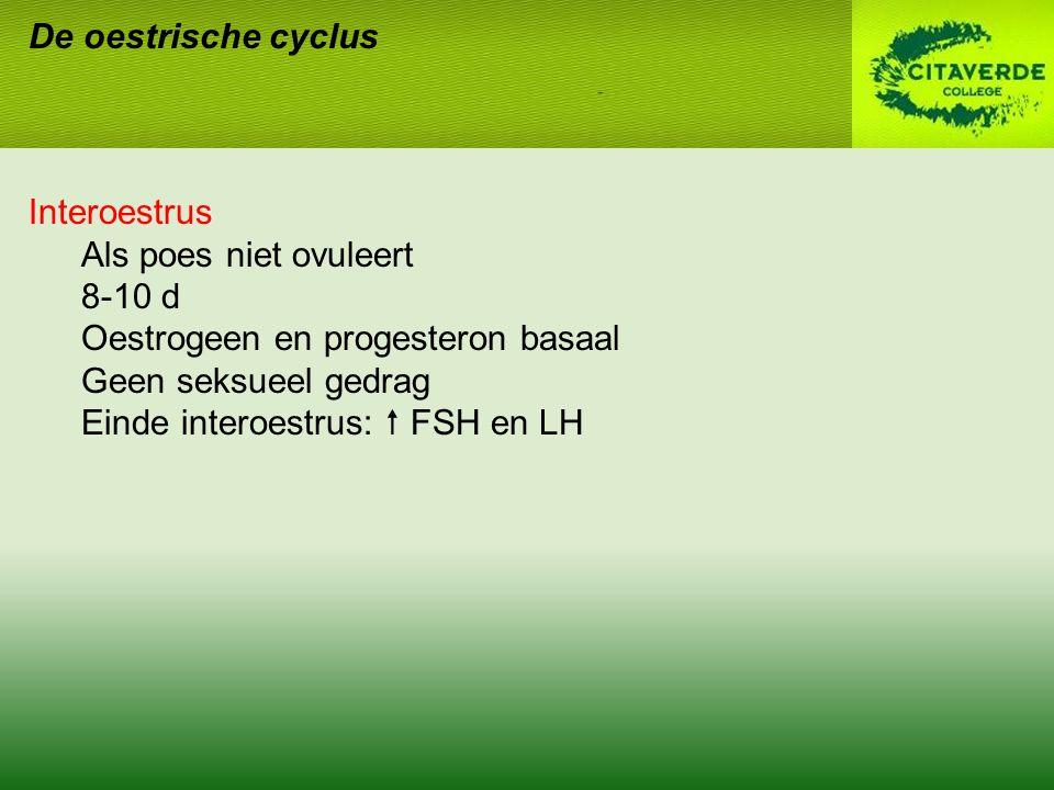 De oestrische cyclus Interoestrus. Als poes niet ovuleert. 8-10 d. Oestrogeen en progesteron basaal.