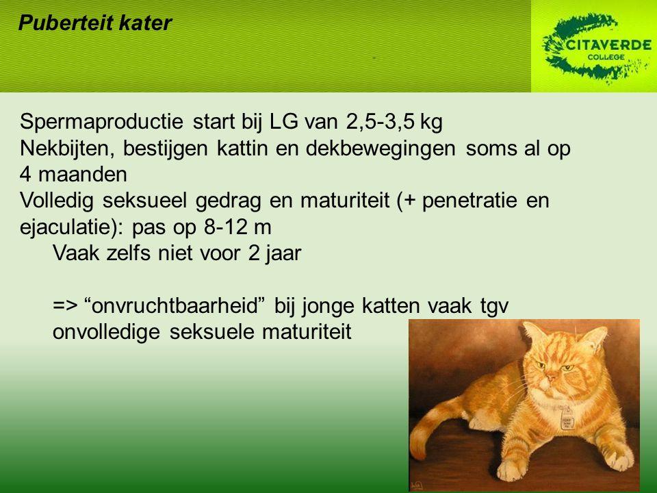 Puberteit kater Spermaproductie start bij LG van 2,5-3,5 kg. Nekbijten, bestijgen kattin en dekbewegingen soms al op.