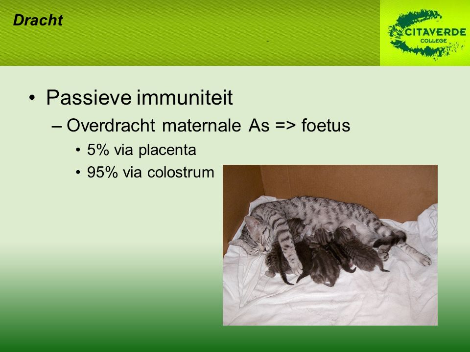Passieve immuniteit Overdracht maternale As => foetus Dracht