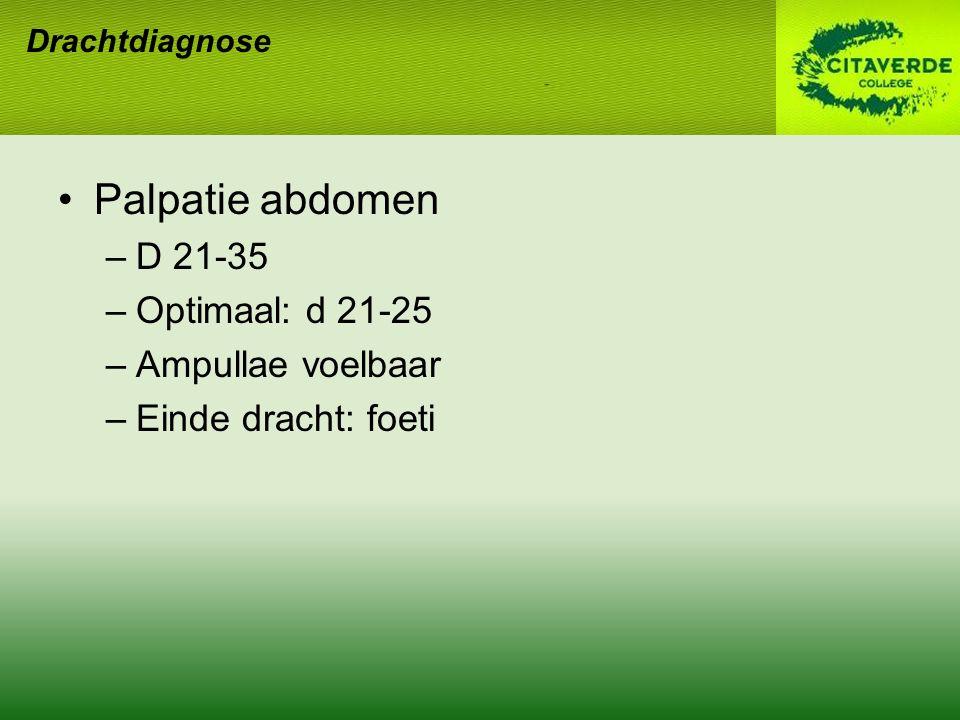 Palpatie abdomen D 21-35 Optimaal: d 21-25 Ampullae voelbaar