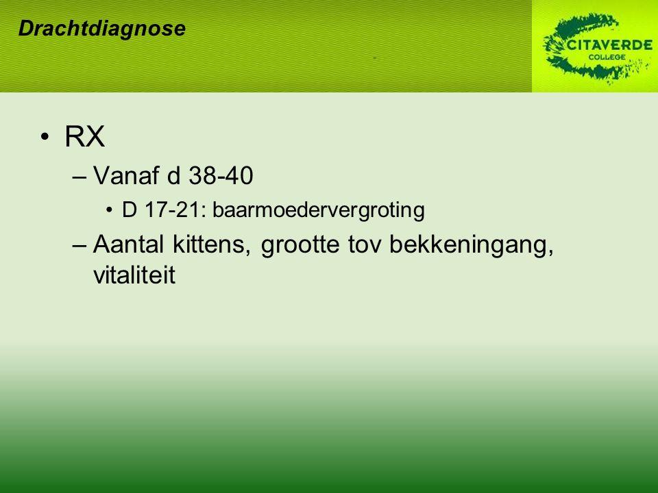 RX Vanaf d 38-40 Aantal kittens, grootte tov bekkeningang, vitaliteit