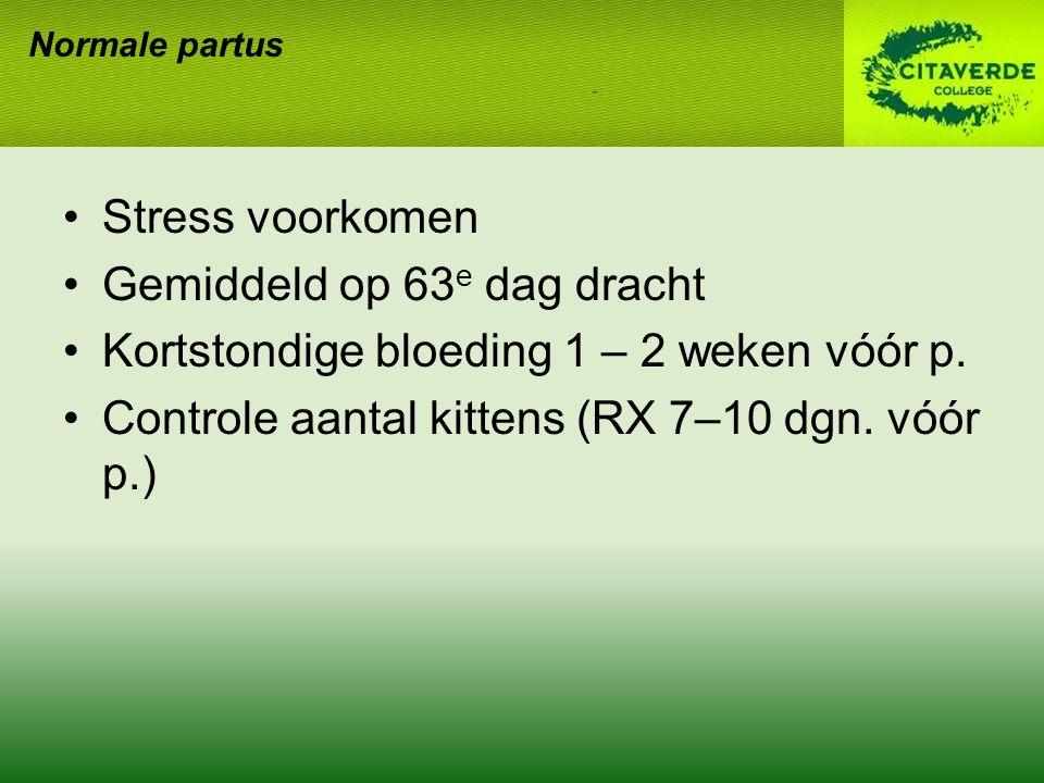 Gemiddeld op 63e dag dracht Kortstondige bloeding 1 – 2 weken vóór p.