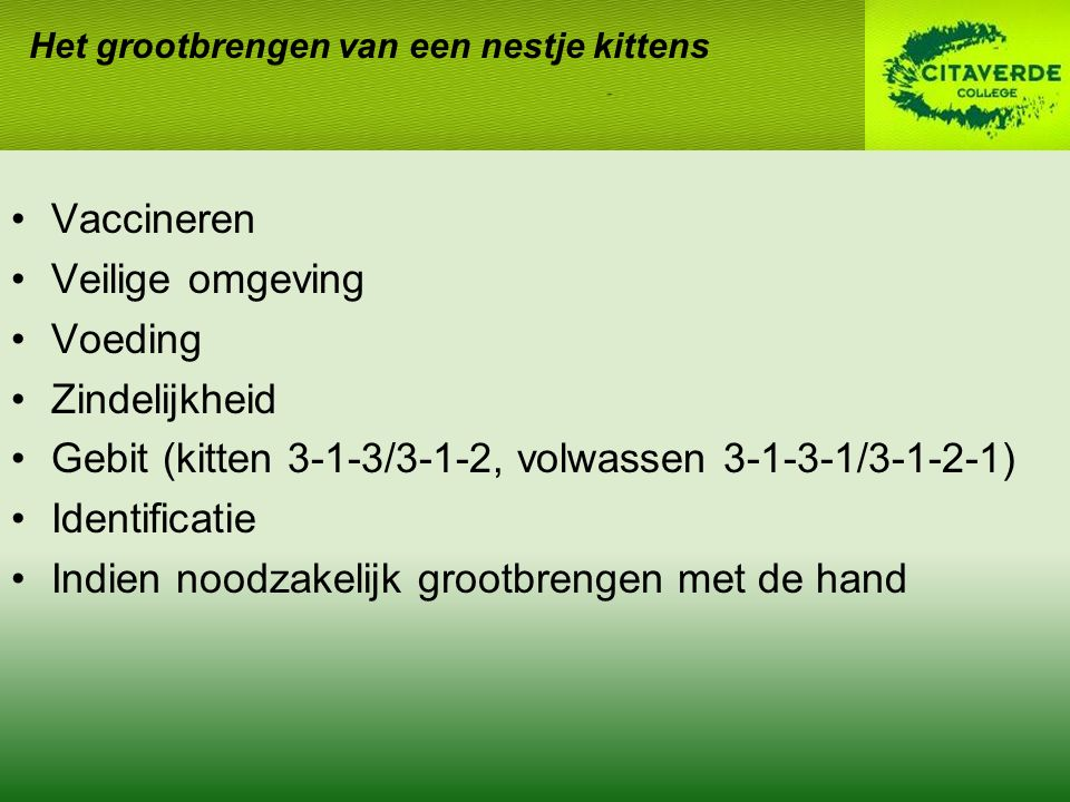 Gebit (kitten 3-1-3/3-1-2, volwassen 3-1-3-1/3-1-2-1) Identificatie