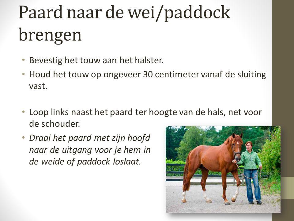 Paard naar de wei/paddock brengen