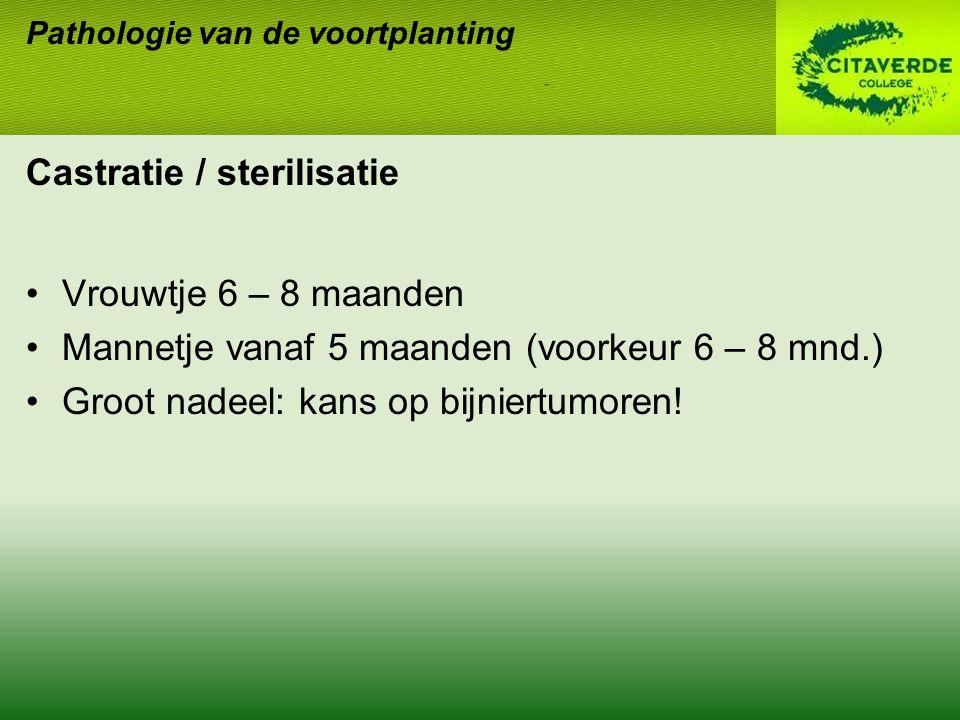Castratie / sterilisatie