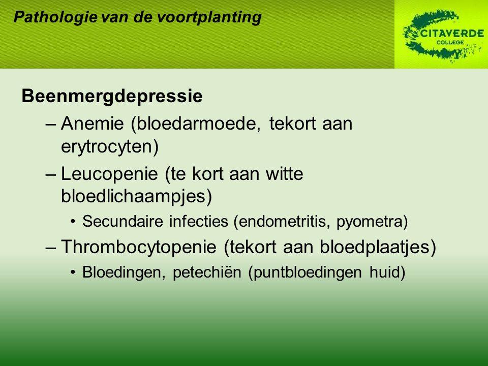 Anemie (bloedarmoede, tekort aan erytrocyten)
