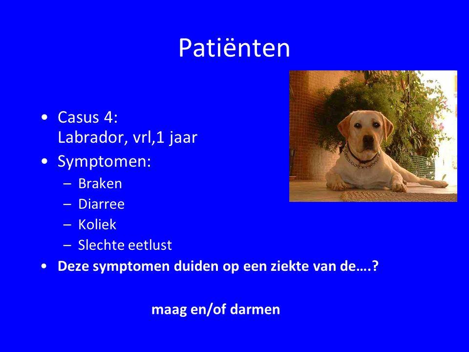 Patiënten Casus 4: Labrador, vrl,1 jaar Symptomen: Braken Diarree