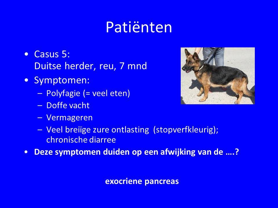 Patiënten Casus 5: Duitse herder, reu, 7 mnd Symptomen: