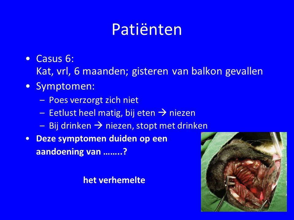Patiënten Casus 6: Kat, vrl, 6 maanden; gisteren van balkon gevallen