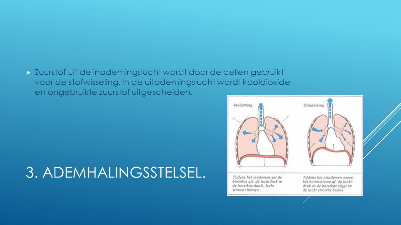 Zuurstof uit de inademingslucht wordt door de cellen gebruikt voor de stofwisseling. In de uitademingslucht wordt kooldioxide en ongebruikte zuurstof uitgescheiden.