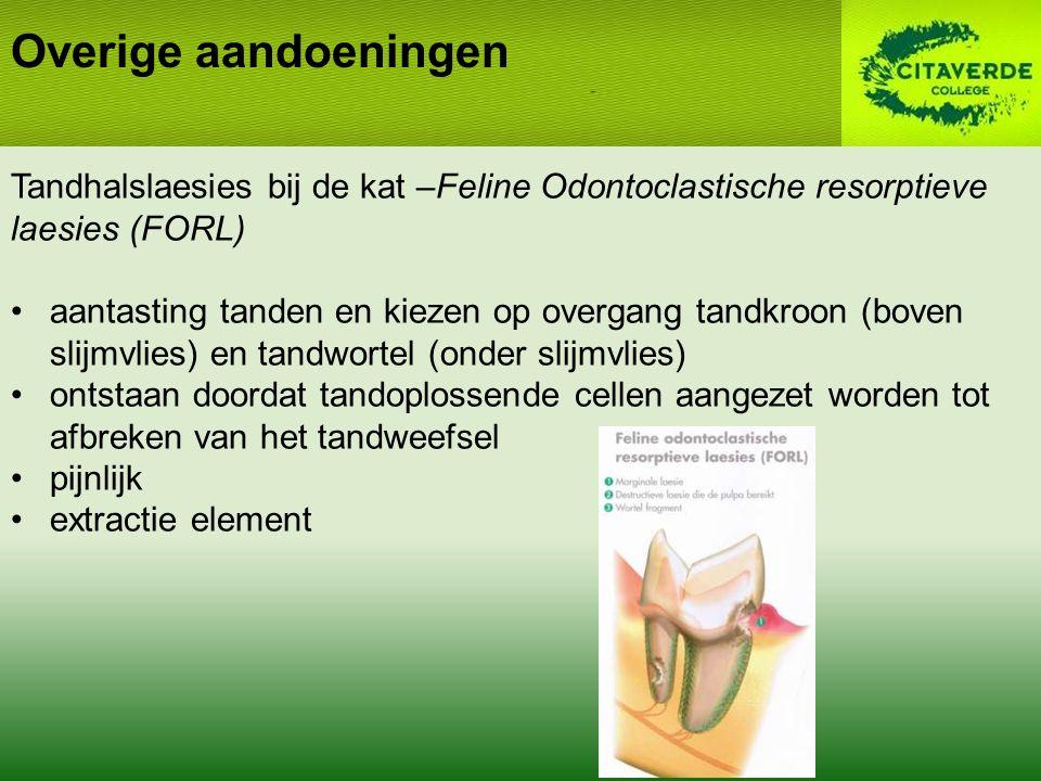 Overige aandoeningen Tandhalslaesies bij de kat –Feline Odontoclastische resorptieve laesies (FORL)