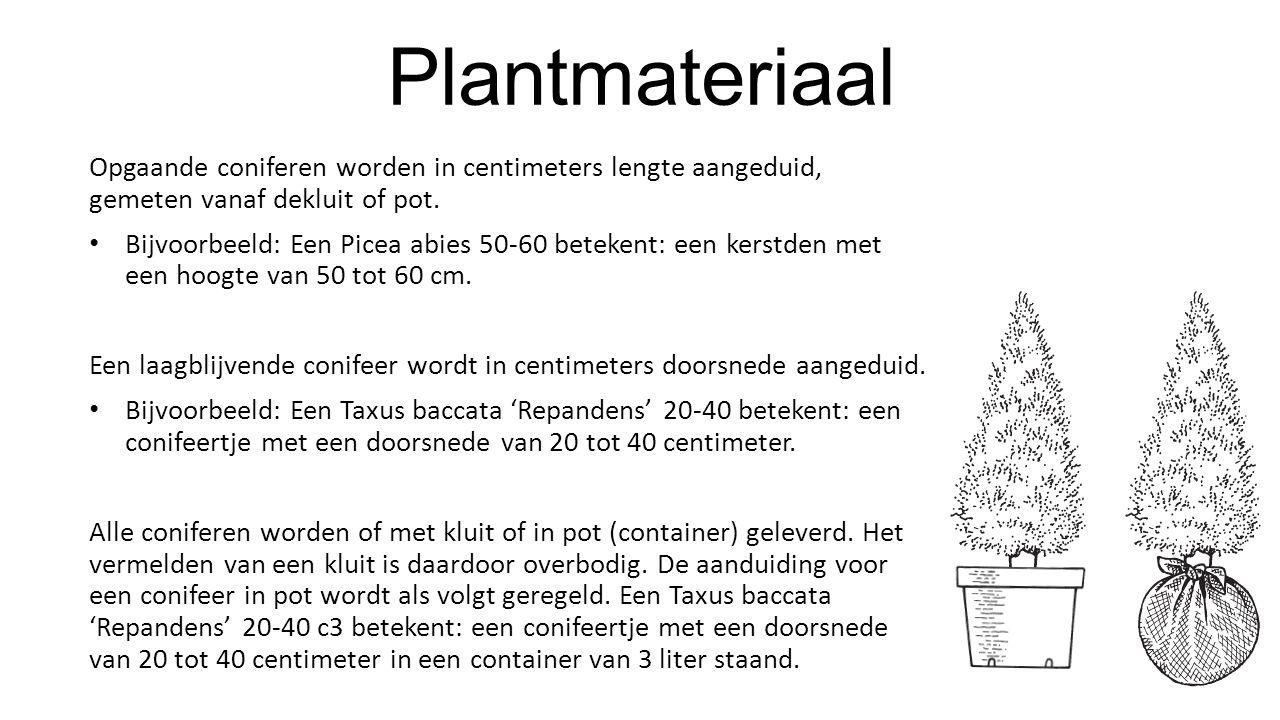Plantmateriaal Opgaande coniferen worden in centimeters lengte aangeduid, gemeten vanaf dekluit of pot.