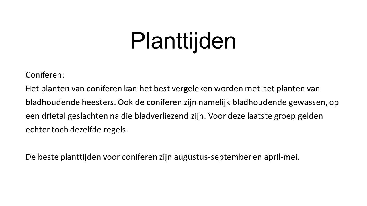 Planttijden Coniferen: