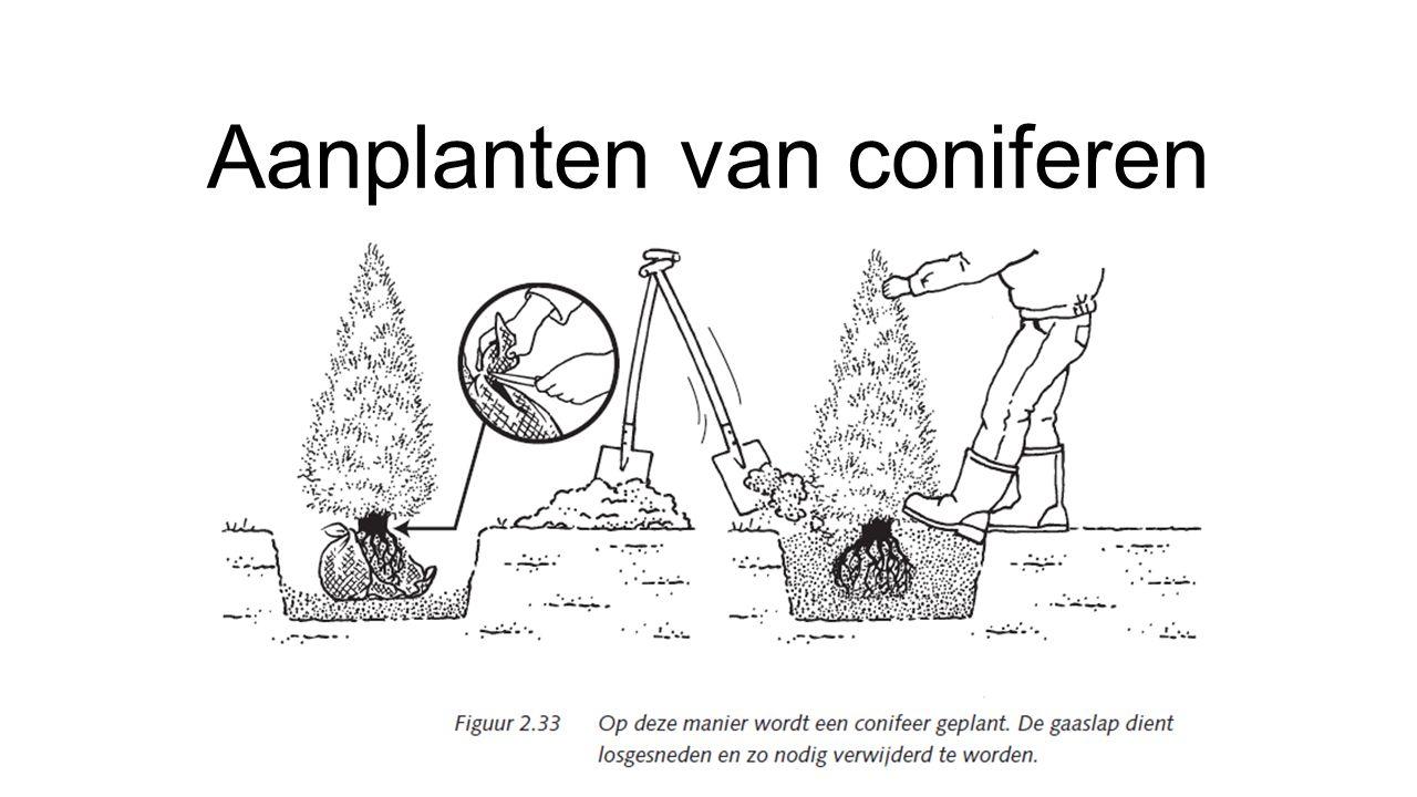 Aanplanten van coniferen
