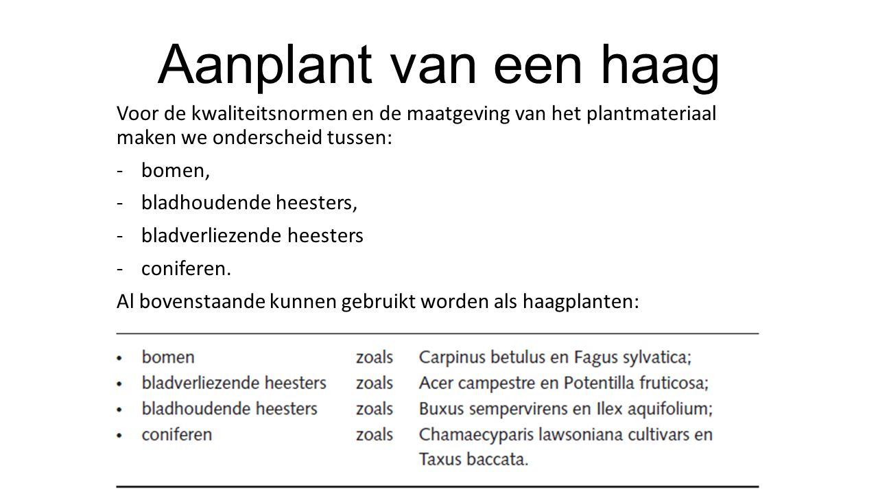 Aanplant van een haag Voor de kwaliteitsnormen en de maatgeving van het plantmateriaal maken we onderscheid tussen: