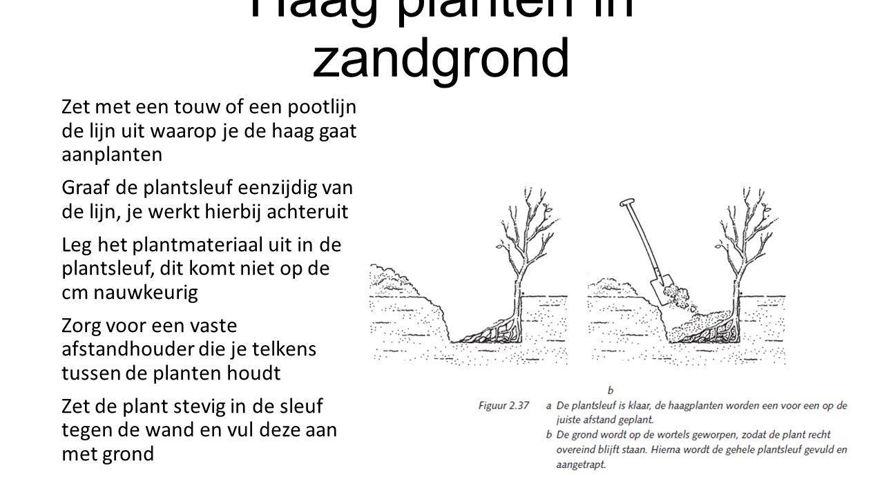 Haag planten in zandgrond