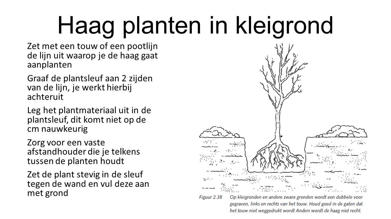 Haag planten in kleigrond