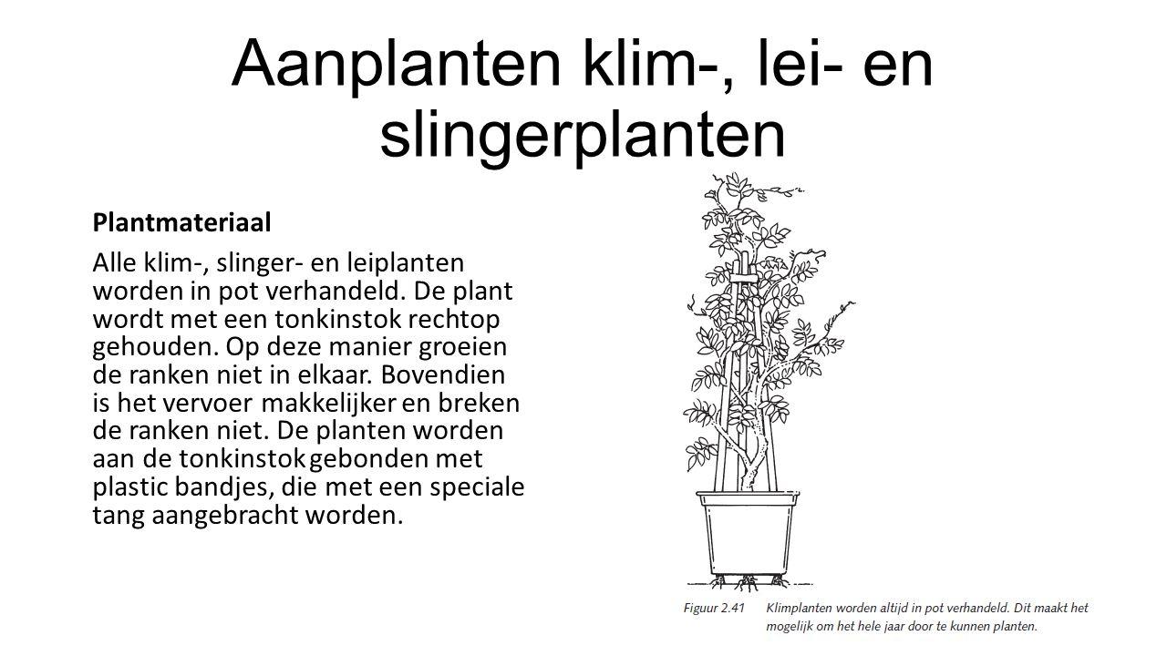 Aanplanten klim-, lei- en slingerplanten